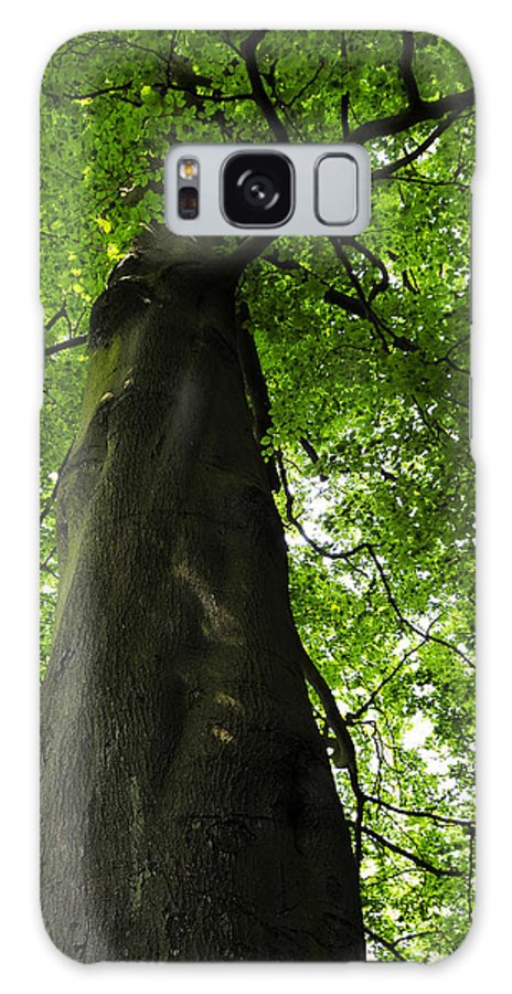 Countryside Galaxy S8 Case featuring the photograph Under The Tree by Svetlana Sewell
