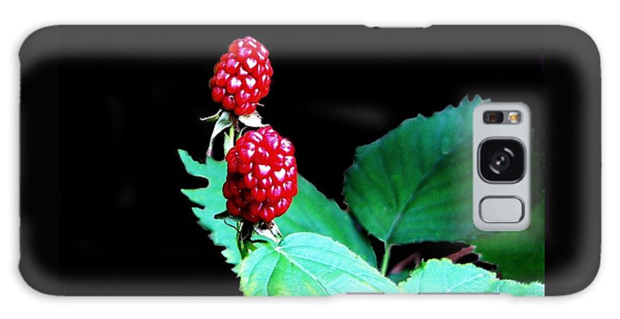Black Berries Galaxy Case featuring the digital art Unripe Blackberries by Kenna Westerman