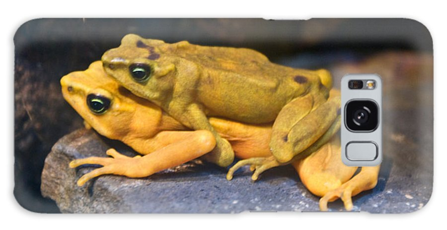 Frogs Galaxy Case featuring the photograph Up Close And Personal by Douglas Barnett