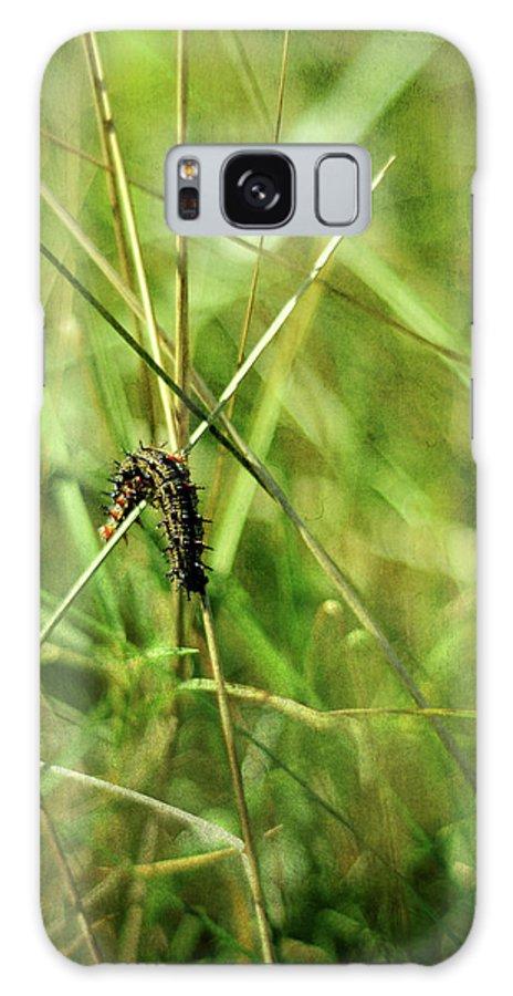 Vanessa Atalanta Galaxy S8 Case featuring the photograph Vanessa Atalanta Red Admiral Butterfly Larvae by Rebecca Sherman