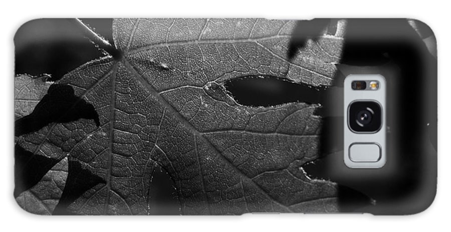 Maple Galaxy S8 Case featuring the photograph Veins Of A Maple by Derek Palmer