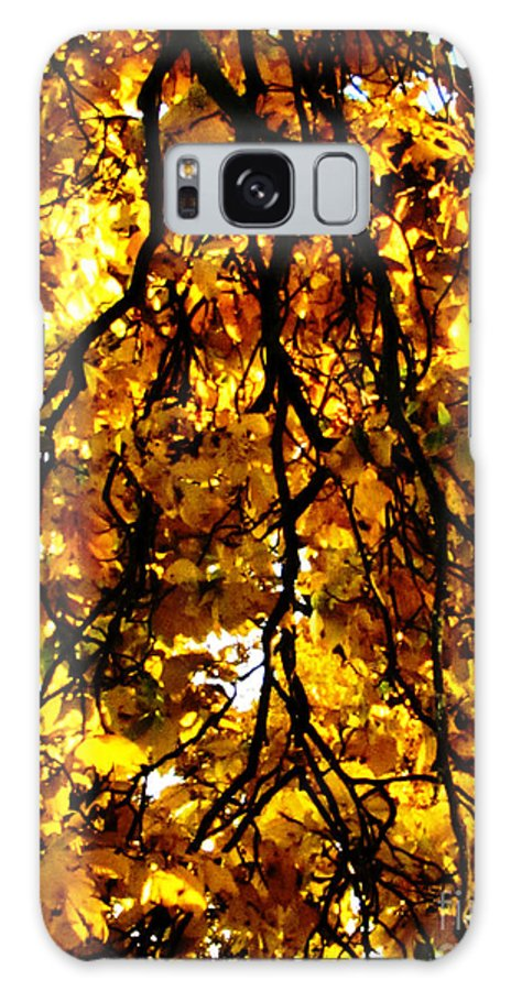 Sun Galaxy S8 Case featuring the photograph Veins Of Life by September Stone