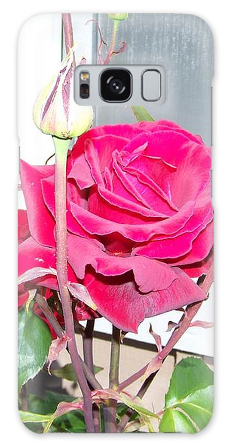 Digital Photography Artwork Galaxy S8 Case featuring the photograph Velvet Red Rose Of Sharon by Laurie Kidd
