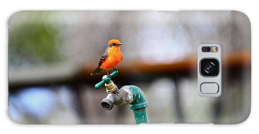 Birds Galaxy S8 Case featuring the photograph Vermilion Flycatcher Two by Diana Hatcher
