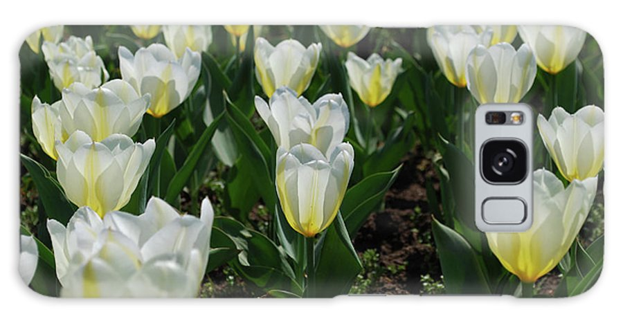 Tulip Galaxy S8 Case featuring the photograph Very Pretty Spring Garden With Flowering White Tulips by DejaVu Designs