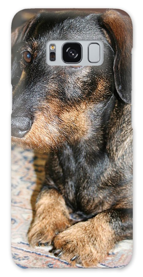 Dog Galaxy S8 Case featuring the photograph Victor by Christiane Schulze Art And Photography
