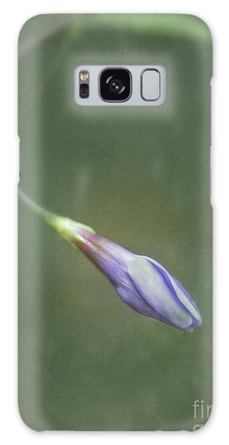 Periwinkle Galaxy S8 Case featuring the photograph Vinca by Priska Wettstein