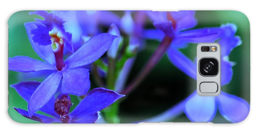 Orchid Galaxy S8 Case featuring the photograph Violet Orchids by Kathleen Struckle