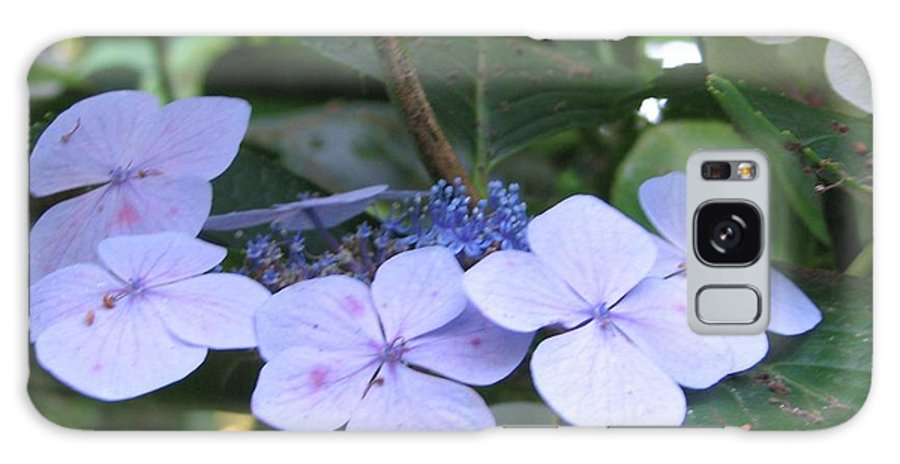 Violets Galaxy S8 Case featuring the photograph Violets O The Green by Kelly Mezzapelle