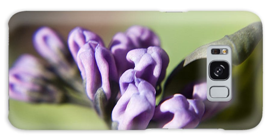Virginia Galaxy Case featuring the photograph Virginia Bluebell Buds by Teresa Mucha