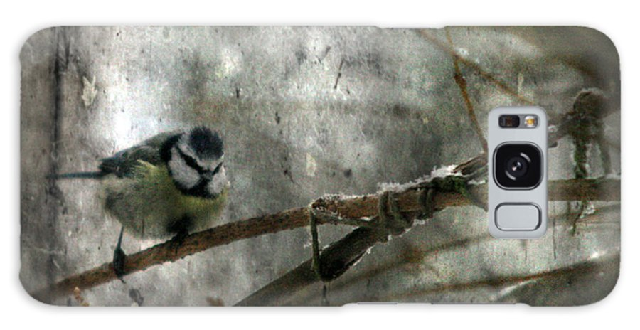 Blue Tit Galaxy S8 Case featuring the photograph Waiting For Springtime by Angel Ciesniarska