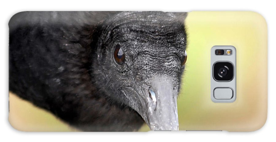 Black Vulture Galaxy S8 Case featuring the photograph Waiting For You by David Lee Thompson