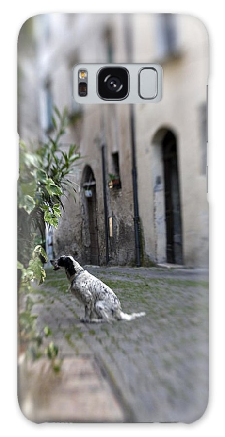 Dog Galaxy Case featuring the photograph Waiting by Marilyn Hunt