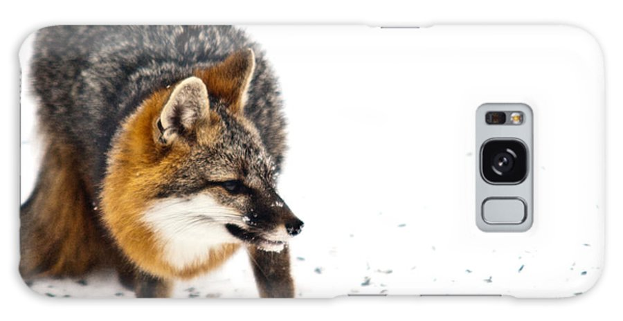 Red Galaxy S8 Case featuring the photograph Wary Red Fox by Douglas Barnett