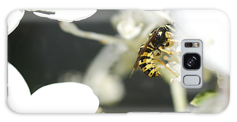 Wasp Galaxy S8 Case featuring the photograph Wasp At Wotk by Robert Skuja
