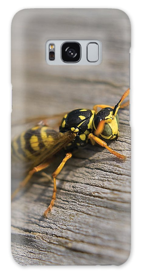 Wasp Galaxy S8 Case featuring the photograph Wasp Close-up by Steve Somerville