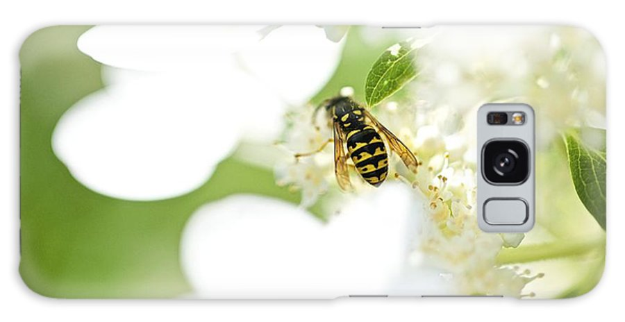 Wasp Galaxy S8 Case featuring the photograph Wasp On Hydrangea by Robert Skuja