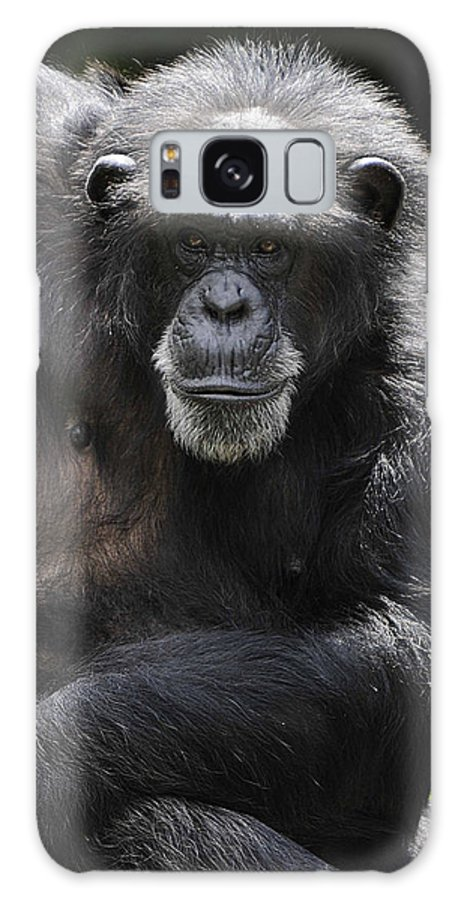 Chimp Galaxy S8 Case featuring the photograph Watching by Keith Lovejoy