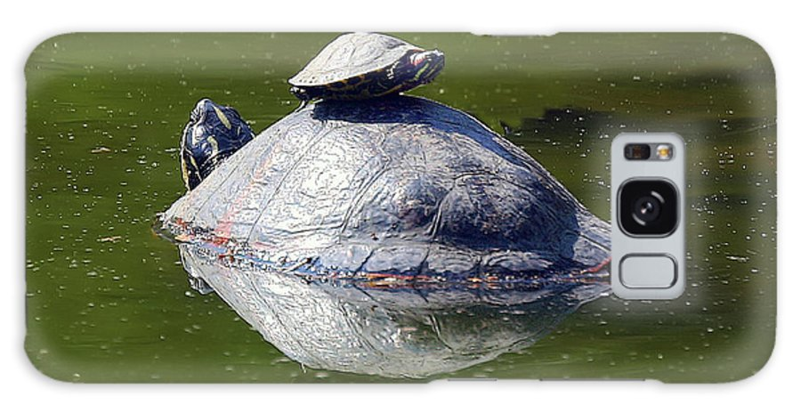 Turtles Galaxy S8 Case featuring the photograph Watching My Back by Geoff Crego