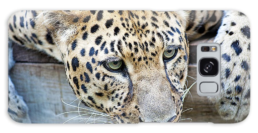 Leopard Galaxy S8 Case featuring the photograph Watching You by Kenneth Albin