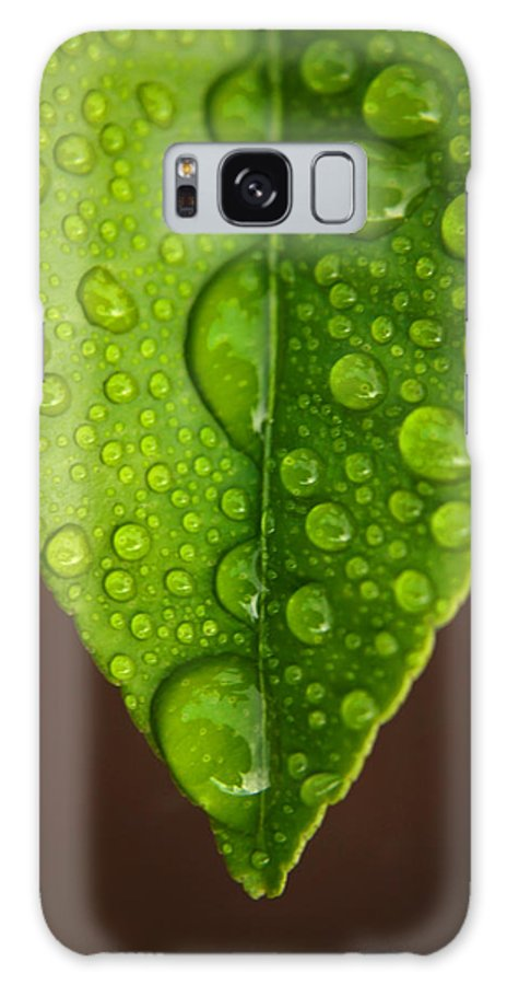 Leaf Galaxy Case featuring the photograph Water Droplets On Lemon Leaf by Ralph A Ledergerber-Photography