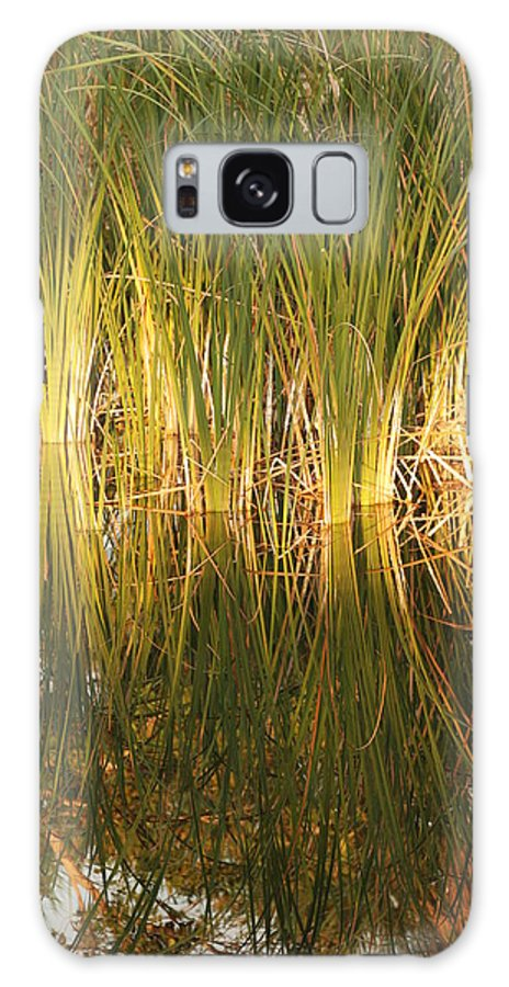 Grass Galaxy S8 Case featuring the photograph Water Grass In Sunset by Rob Hans