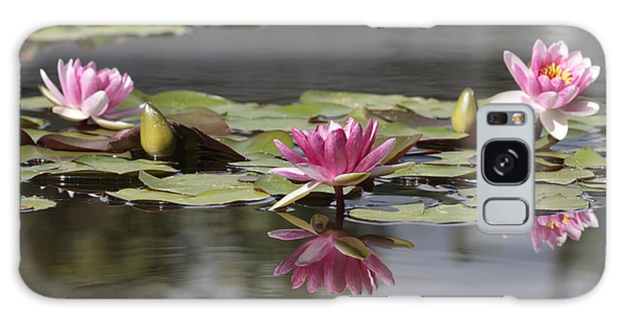 Lily Galaxy S8 Case featuring the photograph Water Lily 3 by Phil Crean
