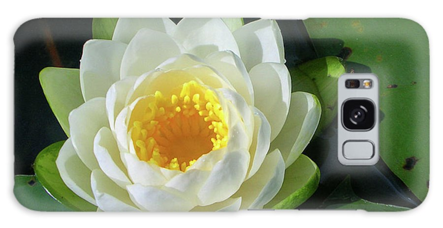 Cassadaga Lakes Galaxy S8 Case featuring the photograph Water Lily 3437 by Guy Whiteley