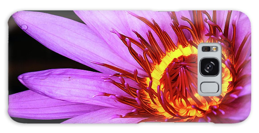 Naples Botanical Garden Galaxy S8 Case featuring the photograph Water Lily by Dennis Goodman