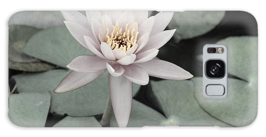 Water Lily Galaxy S8 Case featuring the photograph Water Lily In Soft Pink by Suzanne Gaff