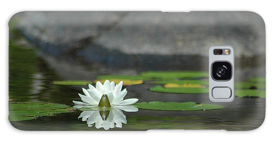 Water Galaxy S8 Case featuring the photograph Water Lily by Steve Cost