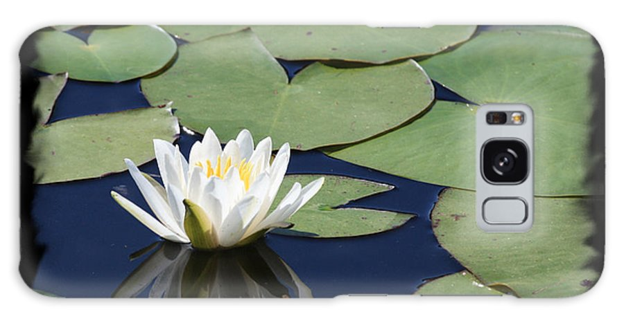 Galaxy S8 Case featuring the photograph Water Lily With Black Border by Carol Groenen