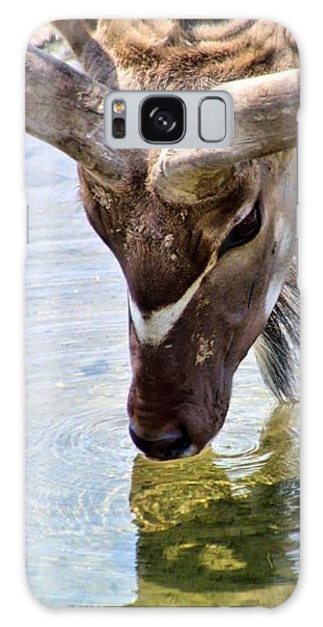 Kudu Galaxy S8 Case featuring the photograph Watering Kudu by Patti Smith