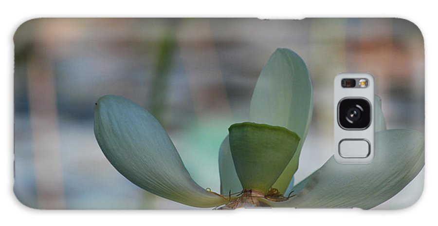 Botanical Galaxy S8 Case featuring the photograph Waterlily Wash Closeup Horizontal by Heather Kirk