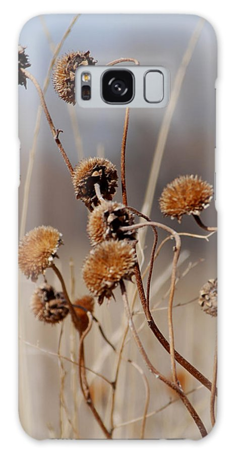 Weeds Galaxy S8 Case featuring the photograph Weeds Are Pretty Too by Margaret Fortunato