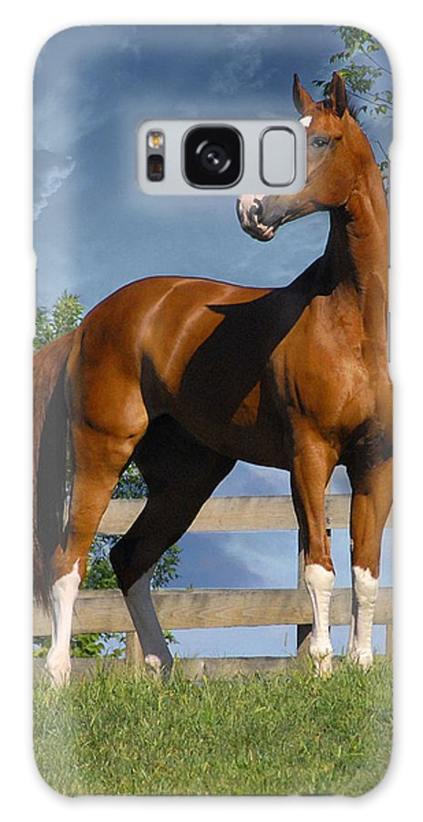 Horses Galaxy S8 Case featuring the photograph Welt Adel by Fran J Scott