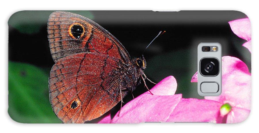 West Indian Buckeye Galaxy S8 Case featuring the photograph West Indian Buckeye by Thomas R Fletcher