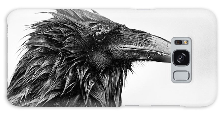 Common Raven Galaxy S8 Case featuring the photograph Wet Raven by Max Waugh