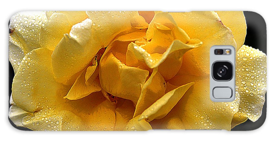 Clay Galaxy S8 Case featuring the photograph Wet Yellow Rose II by Clayton Bruster