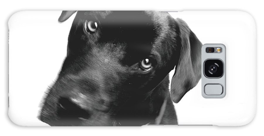Labrador Galaxy S8 Case featuring the photograph What by Amanda Barcon