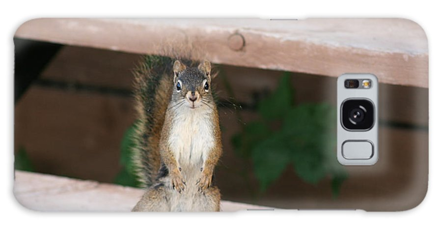 Squirrel Mother Nature Wild Animal Cute Dancing Galaxy S8 Case featuring the photograph What You Lookin At by Andrea Lawrence