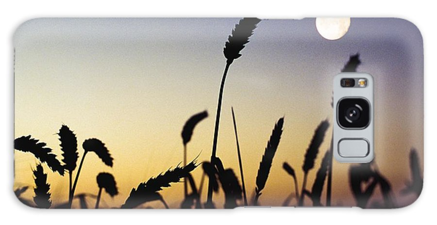 Field Galaxy S8 Case featuring the photograph Wheat Field, Ireland Wheat Field And by The Irish Image Collection