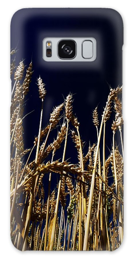Color Image Galaxy S8 Case featuring the photograph Wheat by The Irish Image Collection