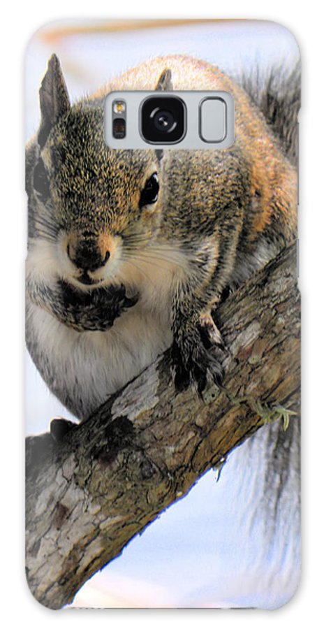 Squirrel Galaxy S8 Case featuring the photograph Where Are The Nuts by Rosalie Scanlon