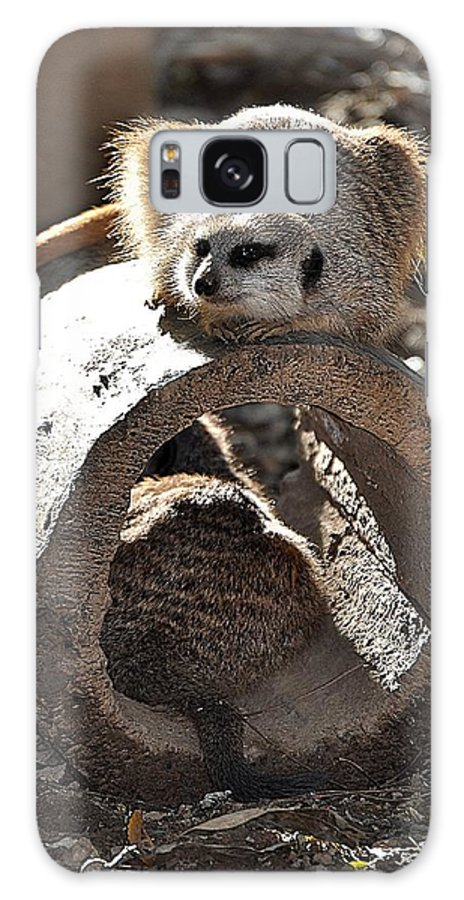 Animals Galaxy S8 Case featuring the photograph Which Way Did He Go by Jan Amiss Photography