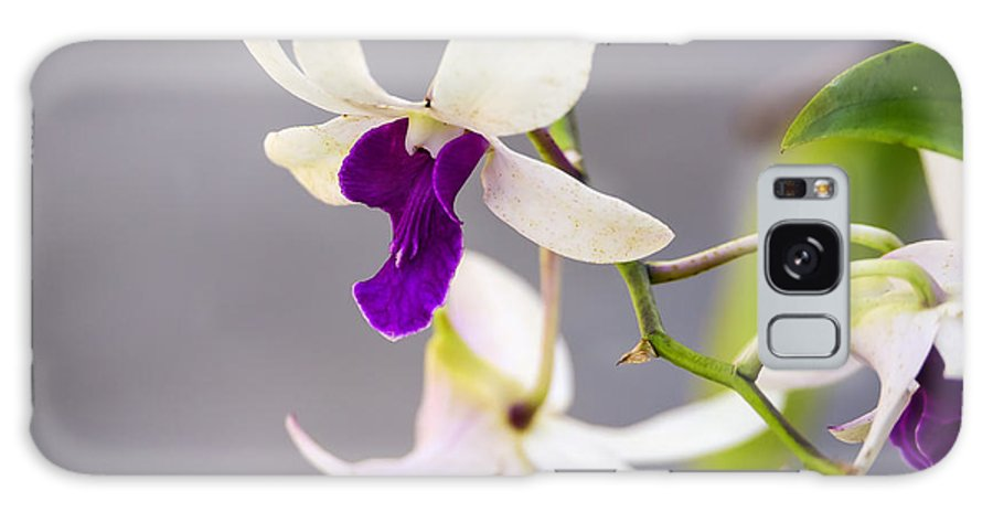 Background Galaxy S8 Case featuring the photograph White And Purple Orchid by Steve Samples