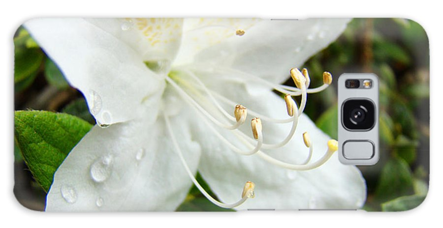 �azaleas Artwork� Galaxy S8 Case featuring the photograph White Azalea Flower 9 Azaleas Raindrops Spring Art Prints Baslee Troutman by Baslee Troutman