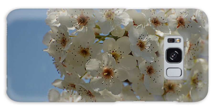 White Galaxy S8 Case featuring the photograph White Blossoms by Jean Booth