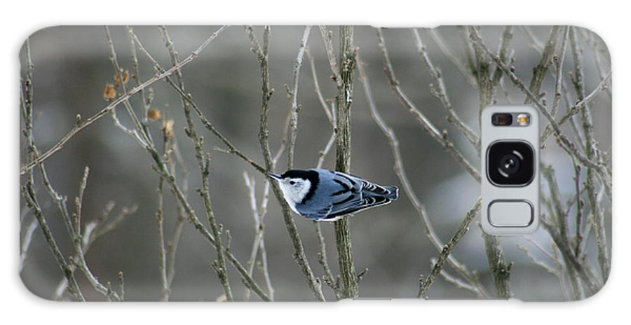 Bird Galaxy S8 Case featuring the photograph White Breasted Nuthatch 3 by George Jones