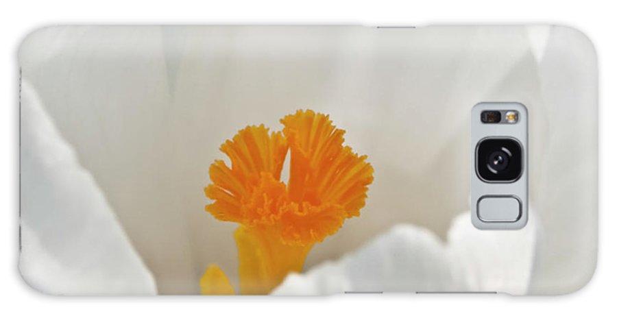 Crocus Flower Galaxy S8 Case featuring the photograph White Crocus by Brian Roscorla